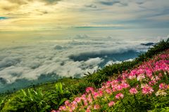 Morning Mist with Mountain ,sea of mis.  Royalty Free Stock Photos