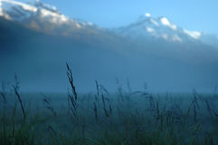 Morning mist in mountains. Stock Photo