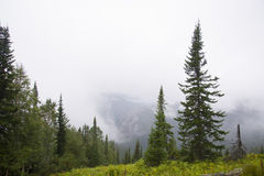 Morning mist in the mountains of North America. Canada and Alaska royalty free stock images