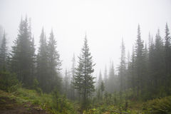 Morning mist in the mountains of North America. Canada and Alaska stock photography