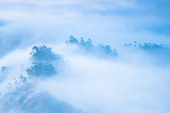 Morning mist at mountains and trees Royalty Free Stock Images