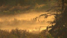 Morning mist over brush. Video of morning mist over brush stock video