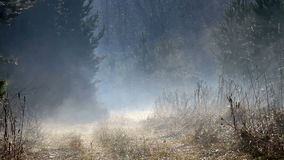 Morning mist over the forest road. Video stock video footage