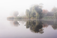 Morning mist over the lake with reflection in the water. Fog on a river Royalty Free Stock Photo