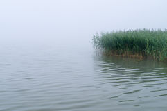 Morning mist over lake with sedge thicket Stock Image
