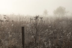 Morning mist over the meadow Stock Photography