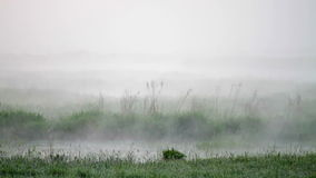 Morning mist over the water. Video stock video footage