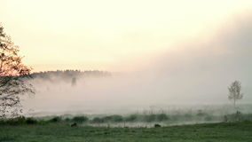 Morning mist over the water. Video stock video