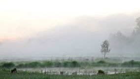 Morning mist over the water. Video stock footage