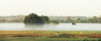 Morning mist in the pasture of the farm Royalty Free Stock Photo