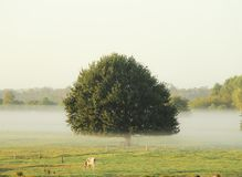 Morning mist in the pasture of the farm Royalty Free Stock Image