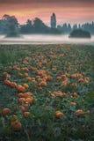 Morning Mist Pumpkin Patch Stock Photography