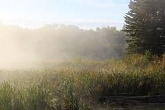 Morning mist rising off of marsh cattails Stock Photography