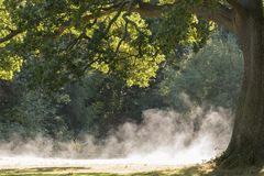 Morning mist rising on Southampton Common royalty free stock photography