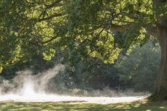 Morning mist rising on Southampton Common Stock Photography