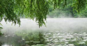 Morning Mist On The River. Morning mist on the calm river in summer morning stock video footage