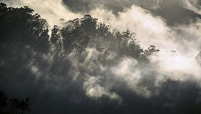 Morning mist rolls over the Ooty mountains Stock Images