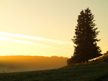 Countryside morning mist yellow sky Stock Photography