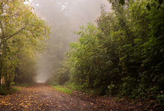 Morning mist on a rural road. In autumn Royalty Free Stock Photos