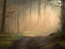 Morning mist shows through shafts of light Royalty Free Stock Photos