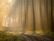 Morning mist shows through shafts of light Stock Images