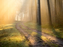 Morning mist shows through shafts of light Royalty Free Stock Photo