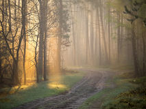 Morning mist shows through shafts of light Stock Photos
