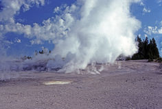 Morning mist and steam in Yellowstone Royalty Free Stock Photo