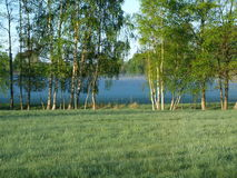 Morning mist on a summer meadow. South Bohemia stock photography