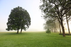 Morning mist ,Taiwan. The tree in the morning mist ,Taiwan Stock Photos