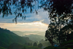 Morning mist at Tea Plantation, Cameron Highland, Malaysia Stock Photography