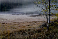 Morning Mist, Toned version Royalty Free Stock Image