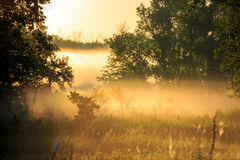 Morning mist among trees Royalty Free Stock Photography