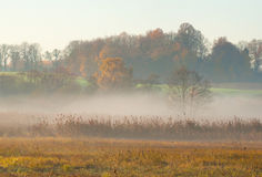 Morning mist Royalty Free Stock Photo