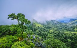 Morning Mist at Tropical rainforest Royalty Free Stock Image