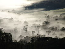 Mist over silhouetted forest Stock Images