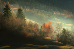 Foggy autumn morning. Morning mists during autumn into the forest Royalty Free Stock Photos