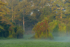Morning Mists Royalty Free Stock Images