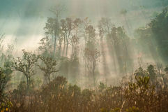 Morning misty in the autumn forest landscape Stock Photos