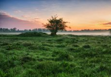 Morning. a misty dawn in a picturesque meadow. Sun rays Stock Image