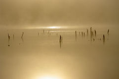 Morning misty river with fog. Royalty Free Stock Photo