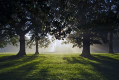 Morning Misty Sun Rays through Oak Trees Royalty Free Stock Photos