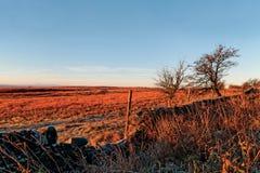 Morning at the moors Royalty Free Stock Photo