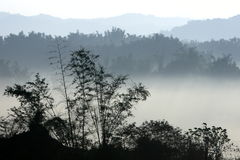 Morning mountain with fog and trees Royalty Free Stock Photography