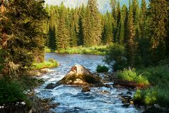 Morning on mountain river Stock Photography