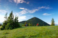 Morning in mountains. Summer morning in mountains. The picture is made in the Ukrainian Carpathians. Ahead mountain Hamster royalty free stock photos