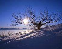 Morning on the Mountaintop. Sunrise with tree and sea of clouds in winter Stock Image