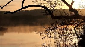 Morning nature landscape with fog stock video footage