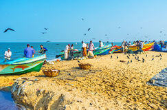 Morning in Negombo port Royalty Free Stock Images