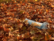 Morning newspaper in autumn leaves. Royalty Free Stock Images